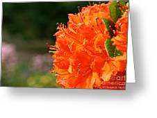 Azalea Profile Greeting Card