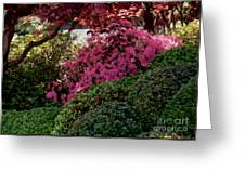 Azaleas And Red Maple Tree Greeting Card
