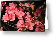 Azaleas In Oil Greeting Card