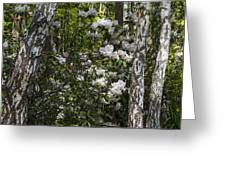 Azaleas In The Trees Greeting Card