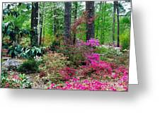 Azaleas Red Maple And Magnolia Trees Greeting Card