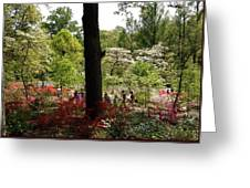Azaleas Us National Arboretum Greeting Card