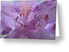 Azalia Macro Greeting Card