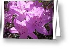 Azalia Triplets Greeting Card