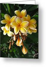 Aztec Gold Plumeria Greeting Card