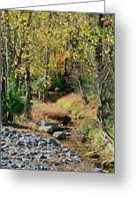 Babbling Brook IIi Greeting Card