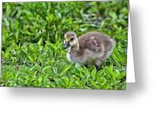 Babe On Safari Greeting Card