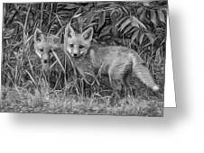 Babes In The Woods 2 - Paint Bw Greeting Card