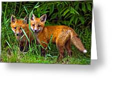 Babes In The Woods Greeting Card
