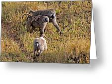 Baboon Family Greeting Card