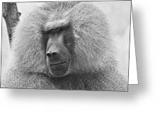 Baboon In Black And White Greeting Card