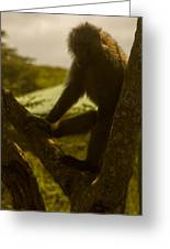 Baboon In Tree Greeting Card