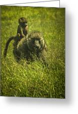Baboon Greeting Card by Jennifer Burley