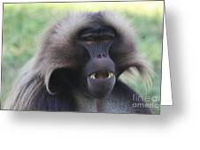 Baboon Greeting Card
