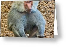 Baboon On A Stump Greeting Card