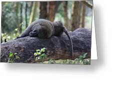 Baboon Sleeping Greeting Card