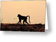 Baboon Sunset Greeting Card
