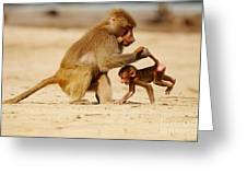 Baboon With Baby Greeting Card