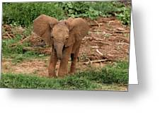 Baby Africa Elephant, Samburu National Greeting Card