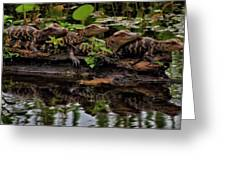 Baby Alligators Reflection Greeting Card