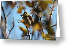 Baby American Goldfinch Learning To Fly Greeting Card