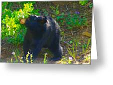 Baby Bear Cub Greeting Card