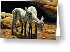 Baby Bighorns Greeting Card
