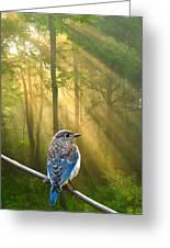 Baby Blue In Morning Fog Sunlight Greeting Card