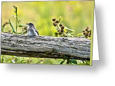 Baby Bluebird Greeting Card