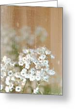 Baby Breath- Special Day Greeting Card