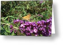 Baby Butterfly Greeting Card