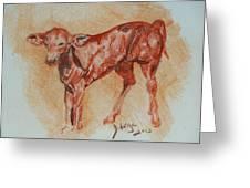 Baby Calf Greeting Card by Deborah Gorga