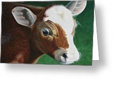 Baby Calf Greeting Card