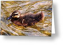 Baby Canadian Goose Greeting Card