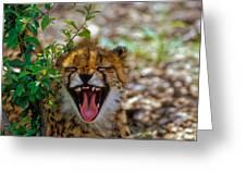 Baby Cheetah  Greeting Card
