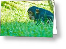 Baby Chimp In The Grass Greeting Card