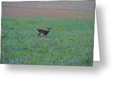 Baby Deer At Sunrise Greeting Card