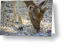 Baby Deer Greeting Card