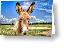 Baby Donkey Greeting Card