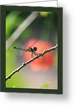 Baby Dragonfly Greeting Card