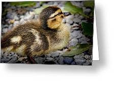Baby Duck Greeting Card