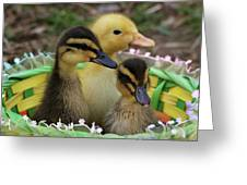 Baby Ducks Greeting Card