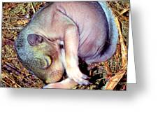 Baby Eastern Gray Squirrel Greeting Card
