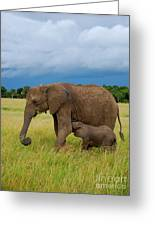 Baby Elaphant Greeting Card