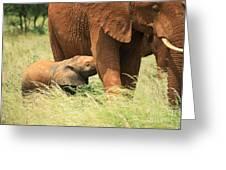 Baby Elephant Feeding Greeting Card