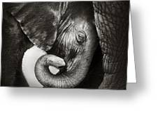 Baby Elephant Seeking Comfort Greeting Card