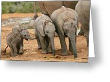 Baby Elephant Trio Greeting Card