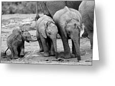Baby Elephant Trio Bw Greeting Card