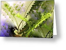 Baby Ferns Unfurling For Jim Greeting Card