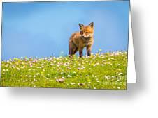 Baby Fox In Field Of Flowers Greeting Card